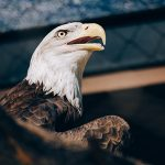 Bald Eagles Are Loving the Helical Pile